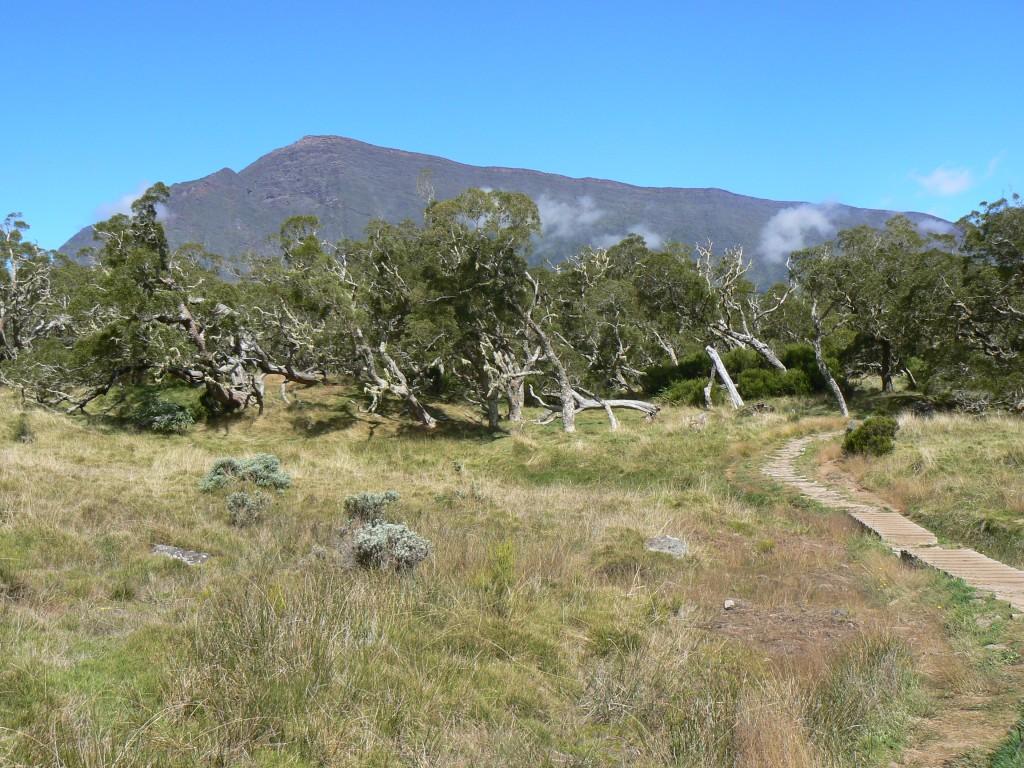 Cascades et forêts de La Réunion