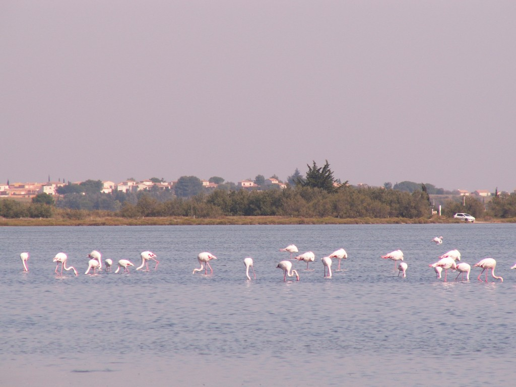 Weekend Entre Méditerranée et étang de Thau