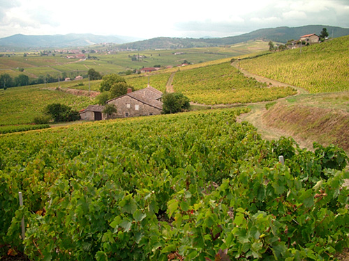 Weekend Autour du Mont Brouilly