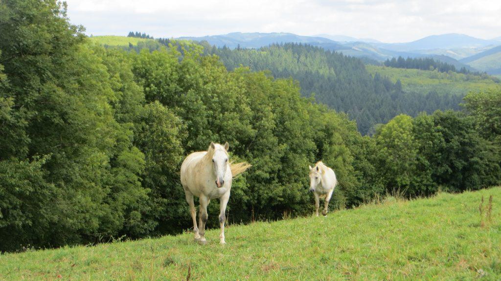 Weekend Isabel et Francis vous invitent à découvrir leur belle région du Tarn.