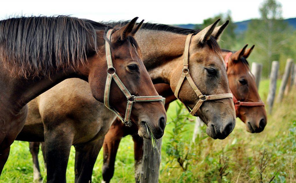 weekend-randonnee-equestre-rhone-alpes-Ain