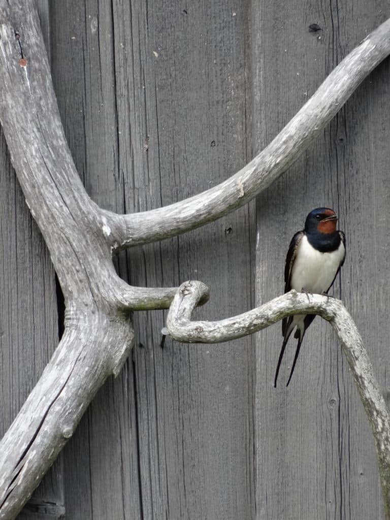Weekend Cécile vous accueille pour une balade à la découverte des oiseaux– birding walk with Cécile