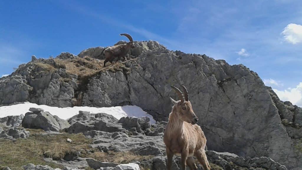 Weekend Randonnée autour du parc du Mercantour vallée de la Roya 06
