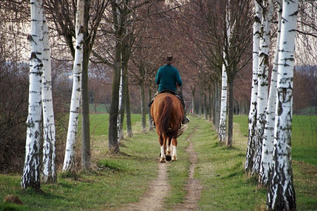 Weekend Hébergement chevaux, cavaliers en forêt de Brotonne
