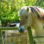 Weekend de Yann - Hébergement chevaux, cavaliers en forêt de Brotonne
